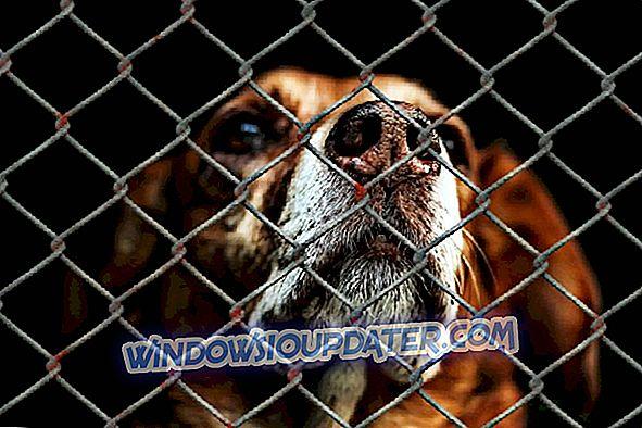 6 najbolji softver za zaštitu životinja za Windows 10